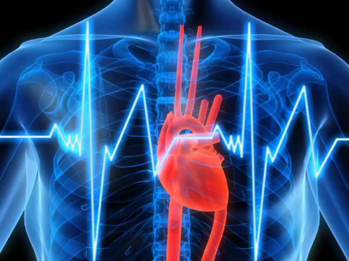 Схема сердца человека